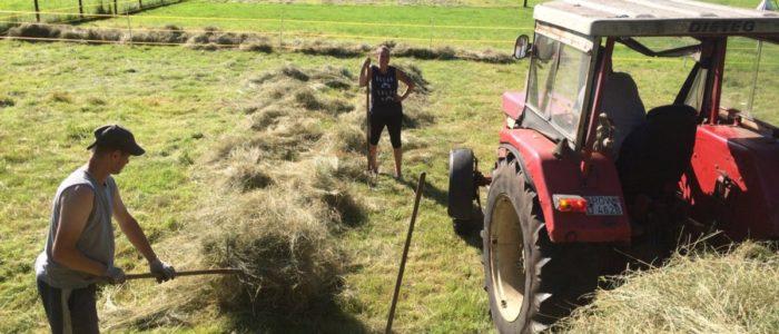 Gras machen